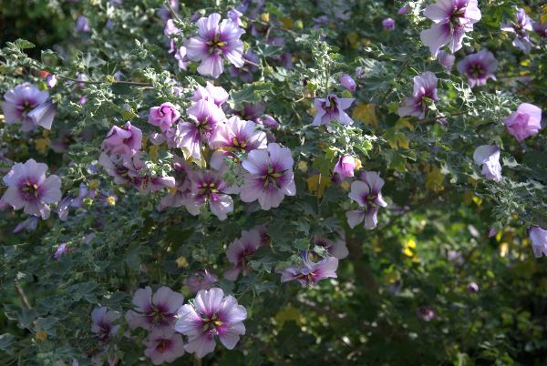 apr-7-2012-spring-garden-party-1-018