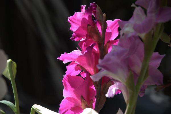apr-7-2012-spring-garden-party-1-038