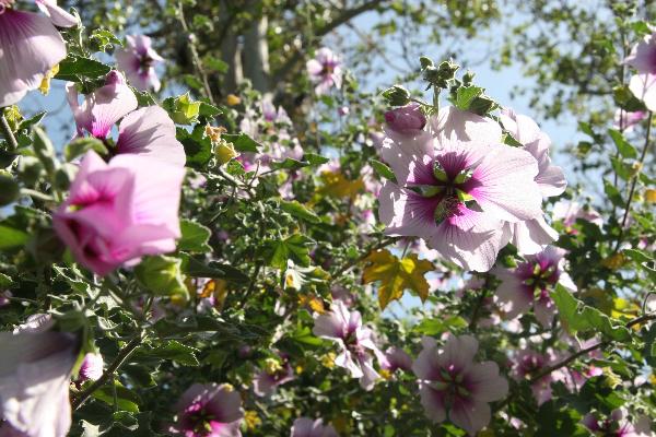 apr-7-2012-spring-garden-party-2-087