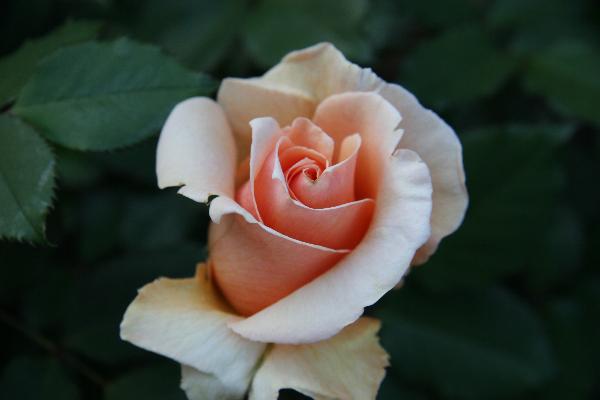 apr-7-2012-spring-garden-party-2-147